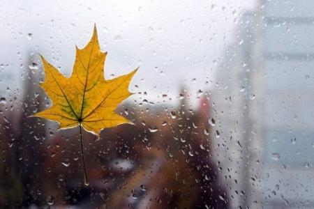 Теплая осень в Украине закончилась