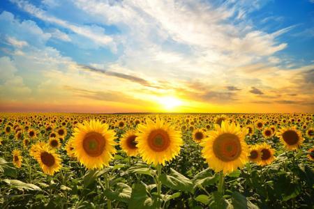 Украину накроет новая волна жары: в Гидрометцентре уточнили прогноз погоды до конца недели
