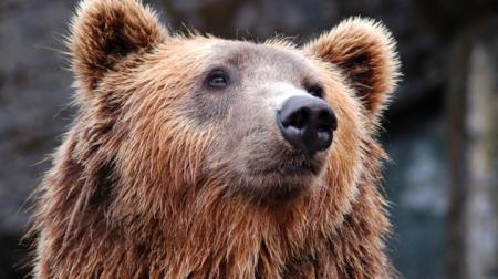 Эксклюзив: В клетках на Прикарпатье нашли изможденных медведей