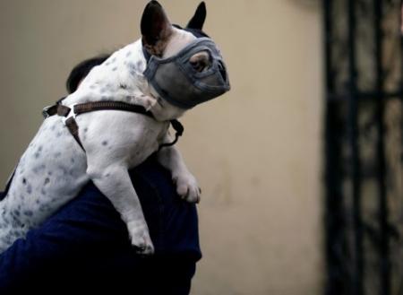 Правила карантина: как обеззаразить свою собаку после прогулки на улице