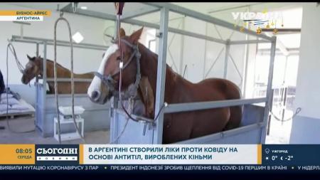 В Аргентине одобрили сыворотку против коронавируса на основе антител лошадей