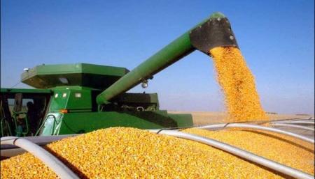 Украинская кукуруза вытесняет американскую с рынка Китая - Reurers