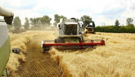 Рекордний врожай: Україна вже зібрала майже 46 мільйонів тонн зерна