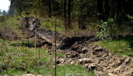 Самую длинную в Украине липовую аллею высадили во Львовской области