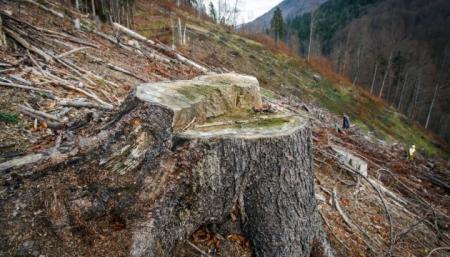 Земля ежегодно теряет более 1,6 миллиона гектаров лесов - ООН