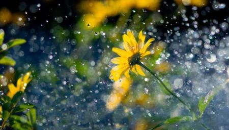Тепло идет с дождями: как изменится погода за несколько дней