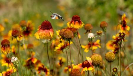 Осень еще не спешит: синоптики прогнозируют 30-градусную жару