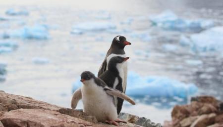 Изменение климата: остров в Антарктике оккупировали