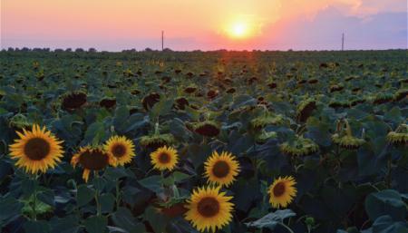 К концу недели в Украине прогнозируют до + 37°