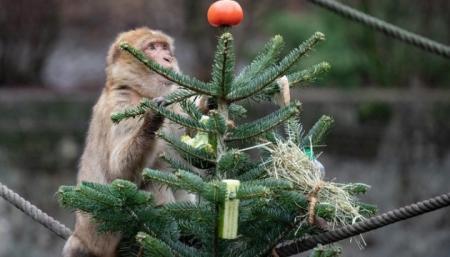 Киевский зоопарк просит не приносить им елки