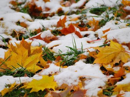Настоящая осень и первый снег. Синоптики дали прогноз погоды на ноябрь