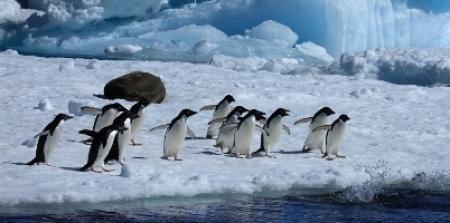 Antarktika_pingviny1_14.02.2020