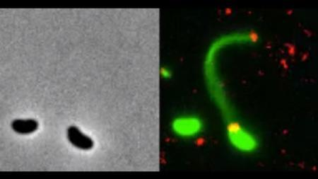 Bakteria_DNK_20.06.18