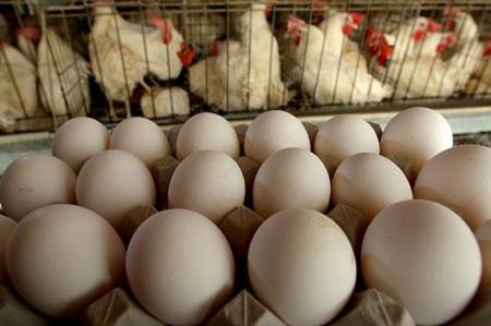 Если в ЕС будут есть украинские яйца, то не придется ли нам с вами платить за них дороже?