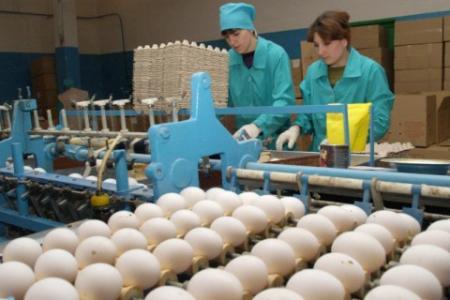 В Украине прогнозируют подорожание куриных яиц на 10-15% до конца года