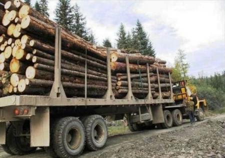На Закарпатье лесовоз сорвался в пропасть: двое погибших