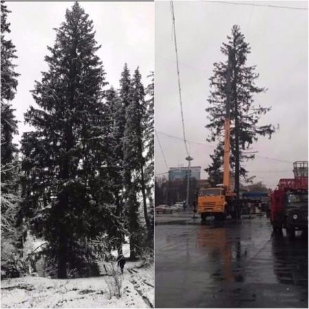 В Молдове главную елку страны уничтожили по дороге из Украины