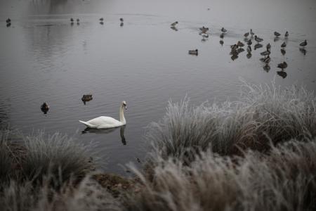 Стала известна причина массовой гибели диких птиц в Херсонской области