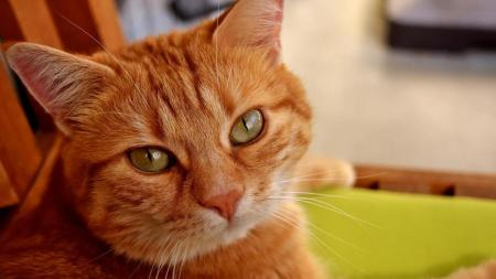 cat-2821650_1920-kFlH-U11011980850001gxB-1024x576LaStampa.it
