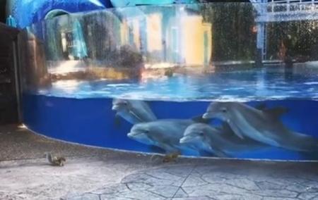 us_delfinu