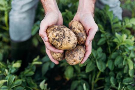 Kartofel_10.09.19
