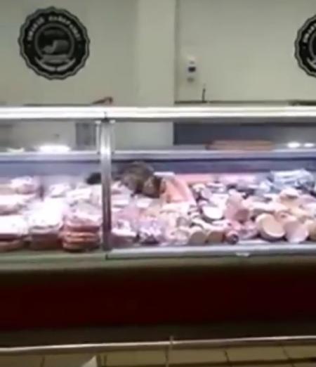 Киевляне засняли, как кот ел колбасу прямо в витрине супермаркета
