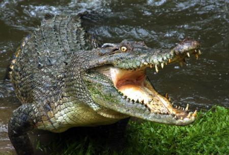 Krokodilu_16.07.18