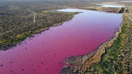 В Аргентине лагуна окрасилась в ярко-розовый цвет, но виновата не природа