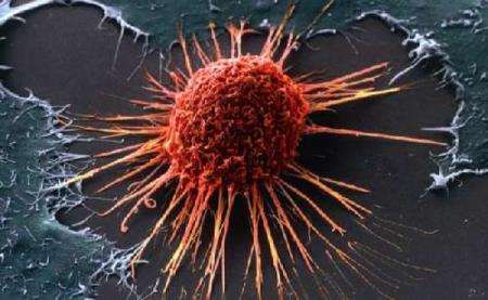 В распространении рака виновато человечество - ученые