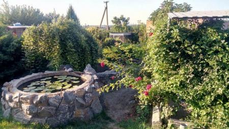 Жительница Запорожской области превратила свой двор в ботанический сад