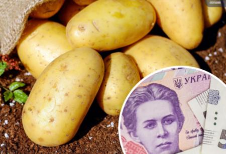 Урожай на межі зриву. Чи стане картопля для українців