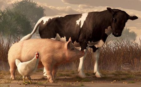 В Украине поголовье коров и свиней сократилось, а птицы выросло - Госстат