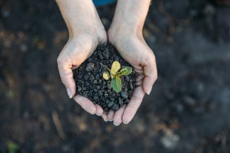 Фермерам упростят доступ к земле: Рада приняла за основу законопроект