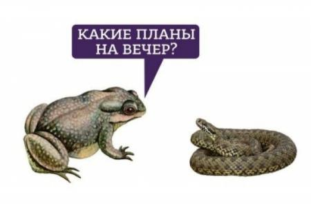 Zhaba_gaduka_01