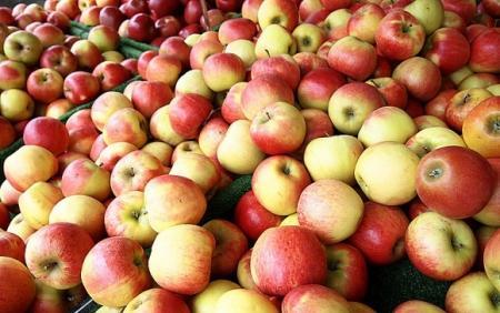 Экспорт украинских яблок в страны ЕС вырос в 9 раз