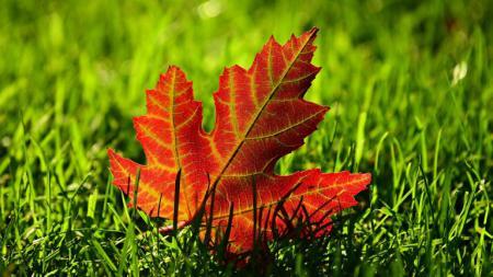 autumn-36806841280_09.09.21