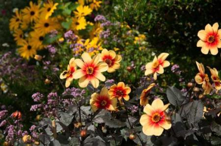 avgustovskie-cvety-kartinki_31_12.08.19
