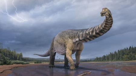 В Австралии обнаружены останки самого крупного динозавра длиной 30 метров