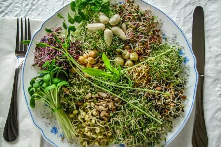 Витамины круглый год: проростки, которые стоит выращивать на своей кухне
