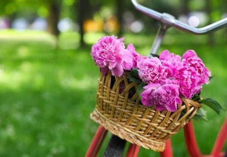 Майские праздники 2018 - сколько выходных будет у украинцев