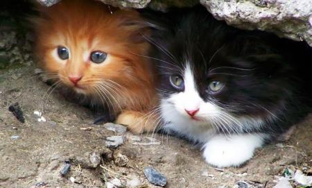 В Бельгии теперь нужна лицензия, чтобы кормить бездомных котов