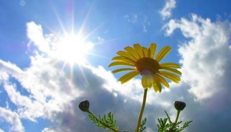 cloudy-daisy-640x512_10.06.21