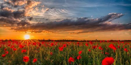 dawn-sunset-poppies-the-field-sun-nature-flower-photo-natur04.08.20