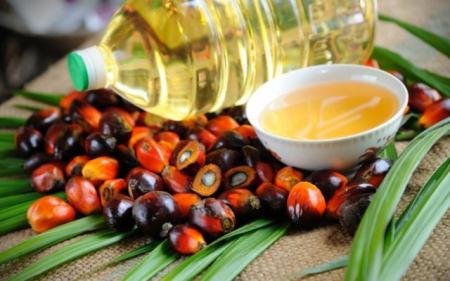 Рада сделала шаг к запрету использования пальмового масла в Украине