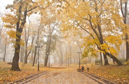 depositphotos_8203441-stock-photo-mariinsky-foggy-park_23.09.18
