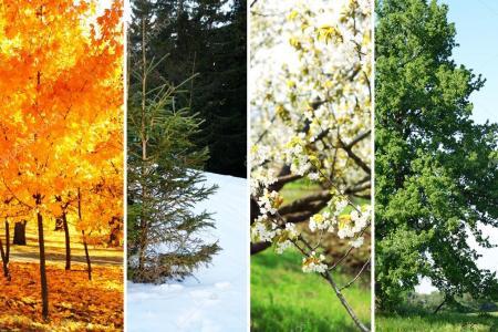 depositphotos_98563106-stock-photo-four-seasons-collage-several-photos_12.02.20