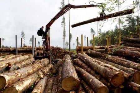 eksport_lesa