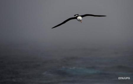 Украинские ученые впервые за 17 лет отправились исследовать Южный океан