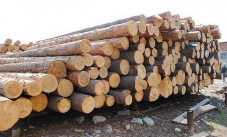Госагентство оценило убытки от незаконных вырубок лесов