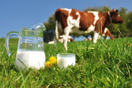 45 украинских предприятий экспортируют молоко в ЕС и Китай - Госпотребслужба